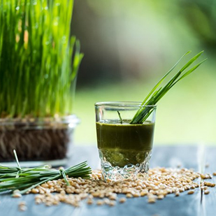Get your dose of wheatgrass today!